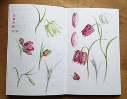 Fritillaria variant flower studies