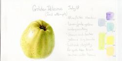 Sue Balks Apple, Beginners Course