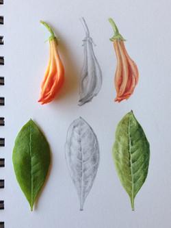 Azalea study by Kathleen Gordon