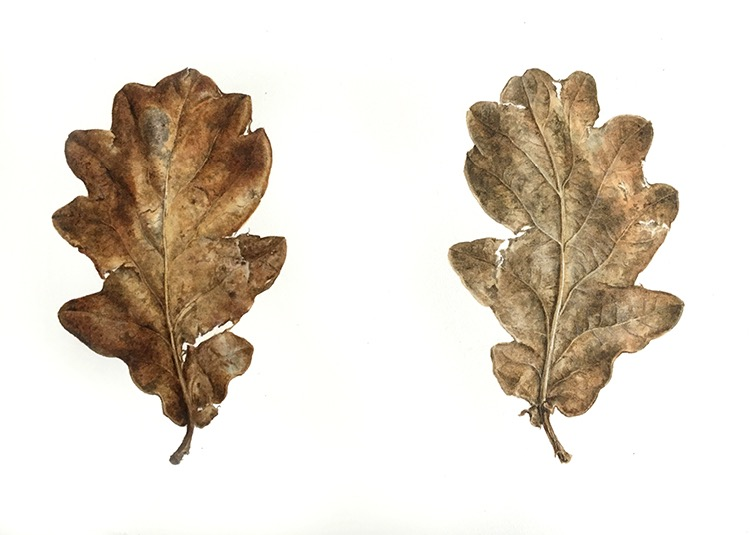 Old Oak Leaves