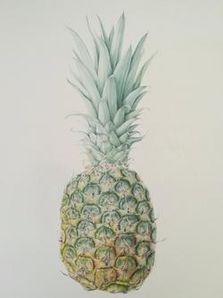 Angela Hooton Pineapple