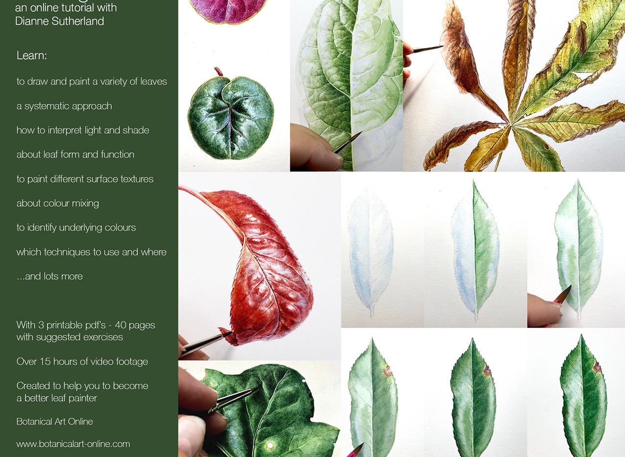Leaf Tutorial advert .jpg