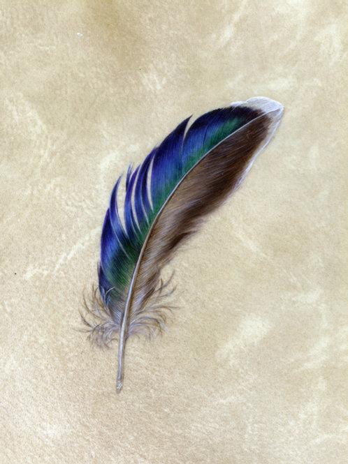 Mallard Feather print