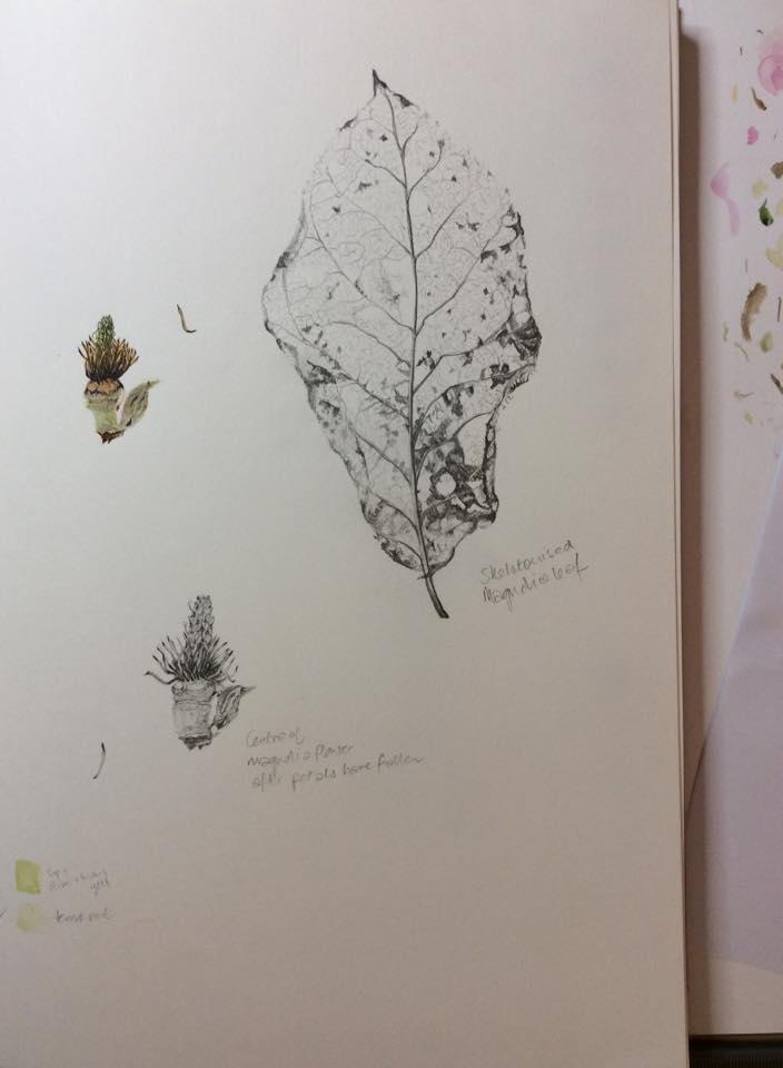 Magnolia studies, Yvonne Sonsino