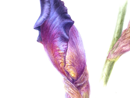Depth and Detail: A New Tutorial in Botanical Watercolour