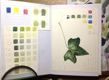 Sketchbook Study of green mixes, Ivy leaf