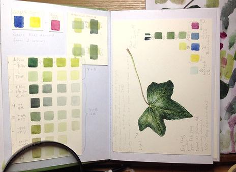 Sketchbook Study of green mixes, Ivy leaf
