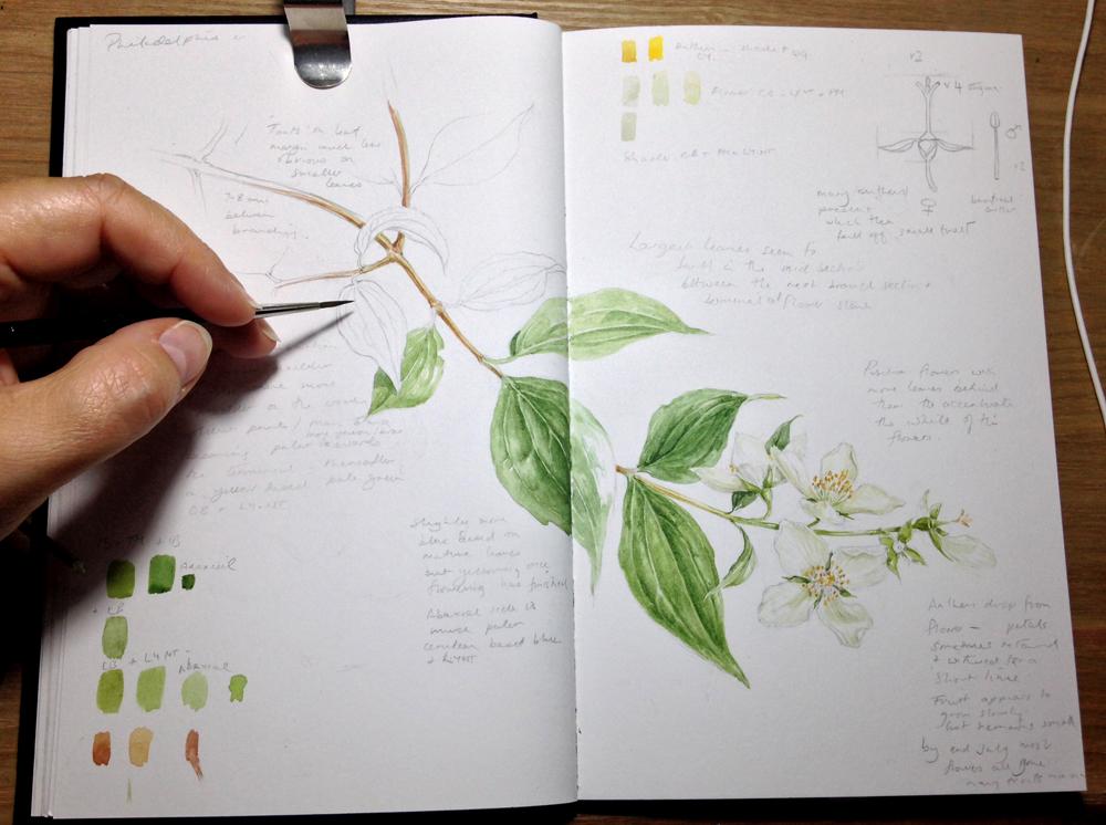 Colour studies week 4