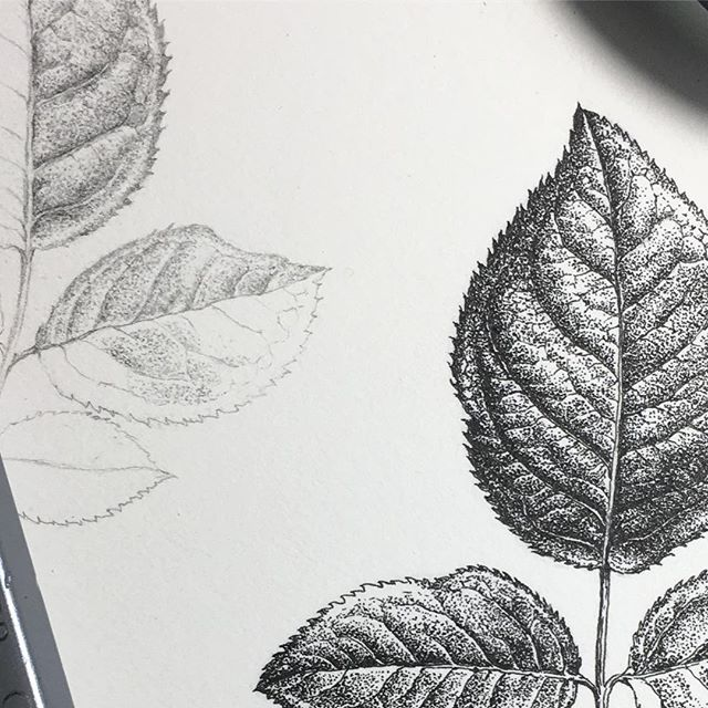 Comparing the stippling technique in graphite and ink