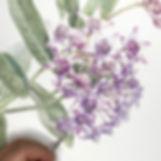 botanicaslart%20_edited.jpg