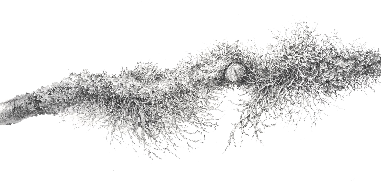 Lichen, Found Aberdeenshire