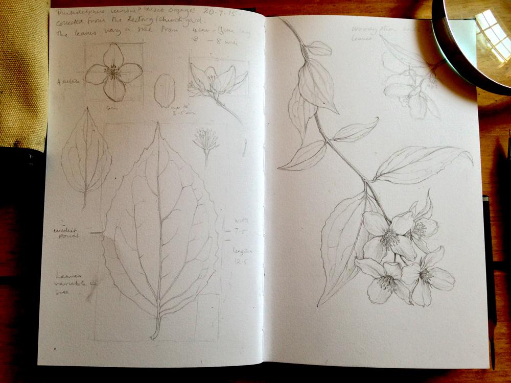 Line drawing, week 2