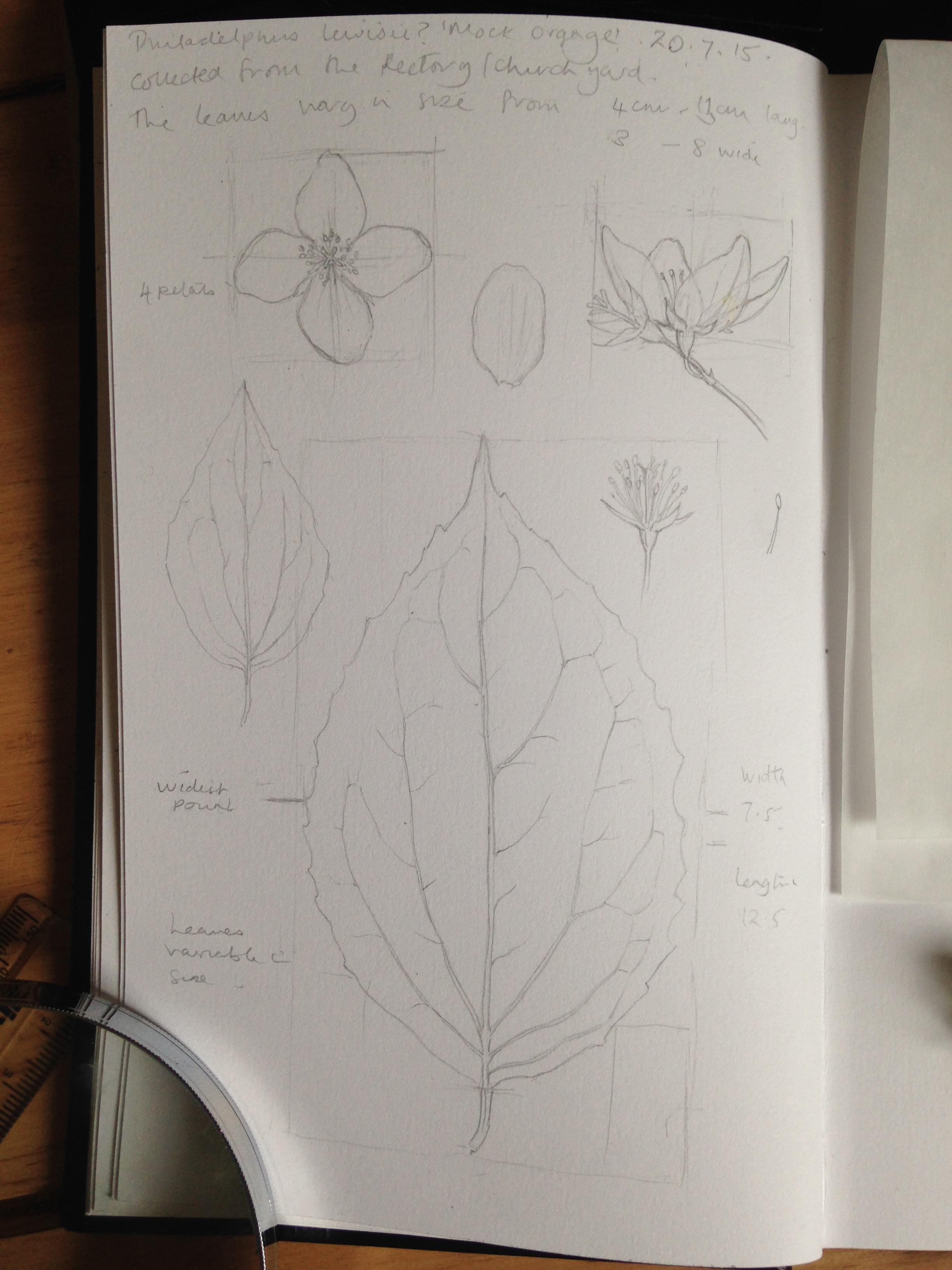 measured drawing