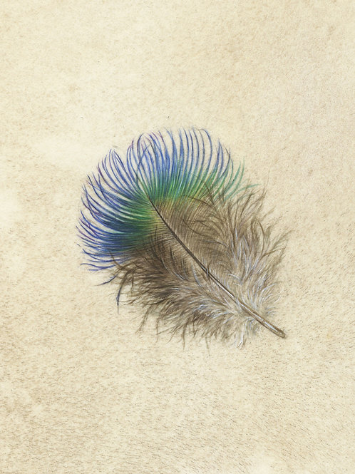 Peacock breast feather Print
