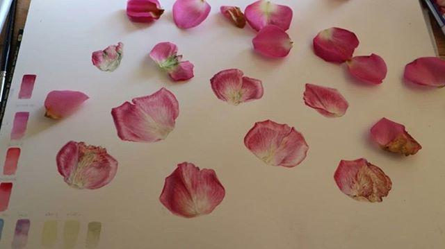 Painting pink rose petals