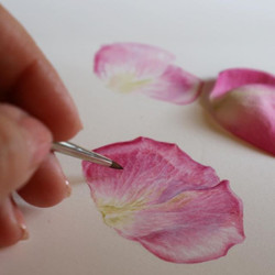 Pink! Petals for the beginners class