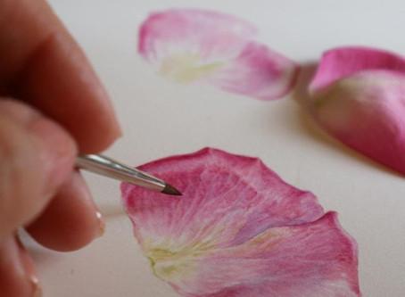 Painting Petals, Field Breaks Workshop 8th August