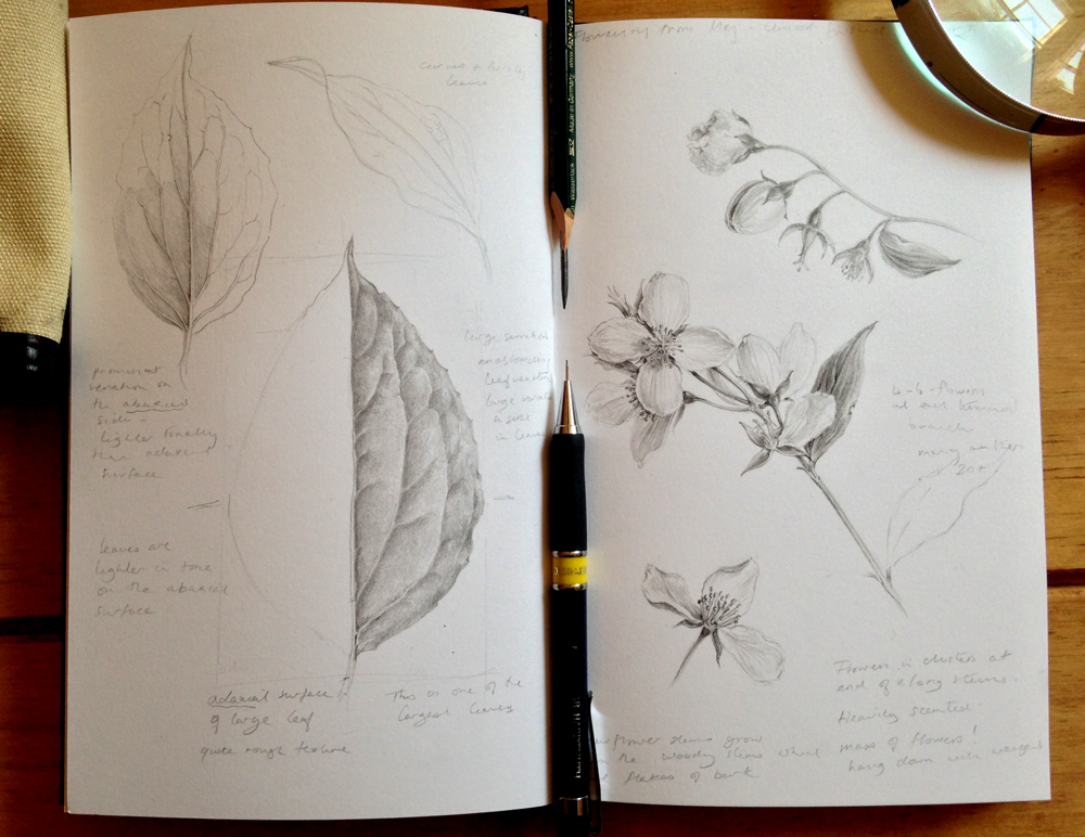 Tonal Drawing, week 3