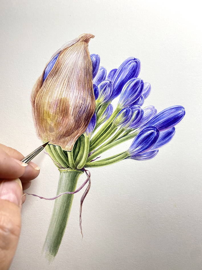 Agapanthus tutorial