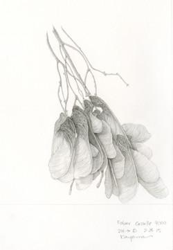 Maple Seeds by Ikumi Kayama