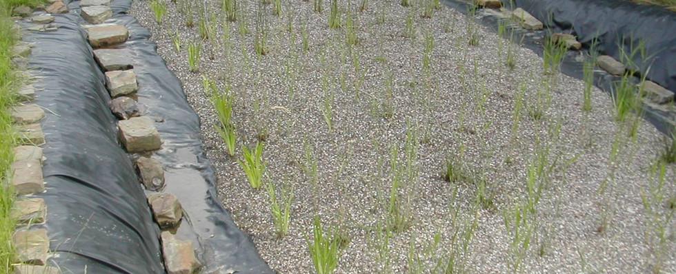 wetland3.jpg