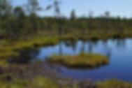 Wetland Creation