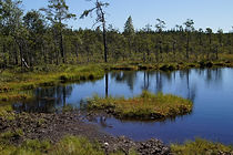 North Texas Association of Environmental Professionals