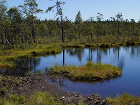 The Windham Swamp: Weaponized Government – Part 2