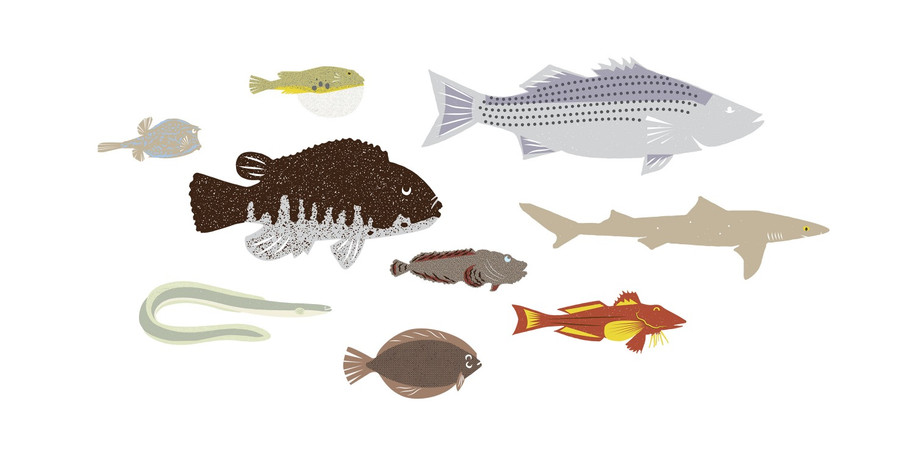 Fish of the Lower Hudson River
