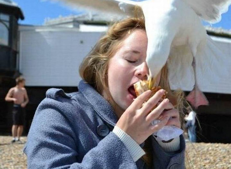 Why do Seagulls eat Cornish Pasties?