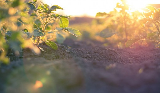 Case study on Award-winning Sustainable Financing at Royal Avebe