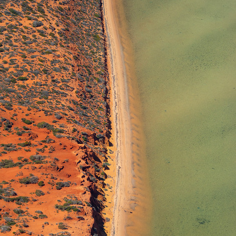 Shark Bay, Australia - Lisa Michele Burn