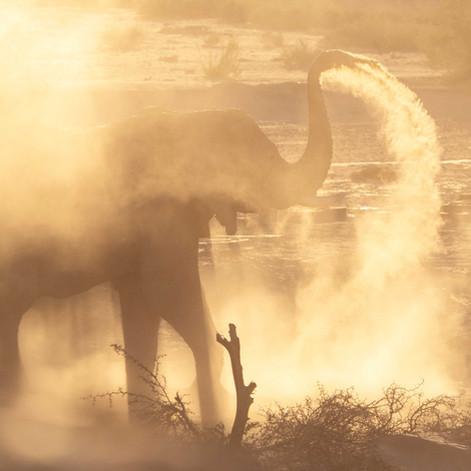 Desert Adapted Elephant, Namibia