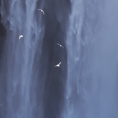 Seabirds + Cascades