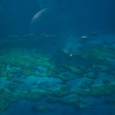Hardy Reef, Great Barrier Reef (7).jpg
