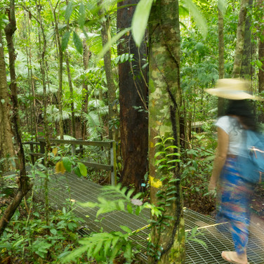 Daintree Discovery Centre (3).jpg