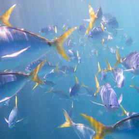 Underwater Images, Great Barrier Reef  (
