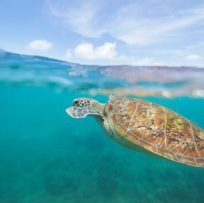 Mackay Cay - Cape Tribulation + Sailaway