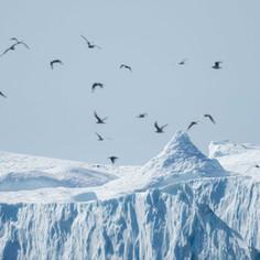 Icebergs and Birds