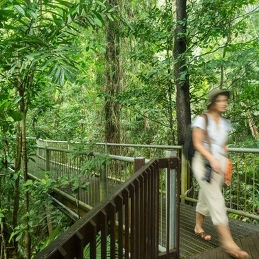Daintree Discovery Centre (1).jpg