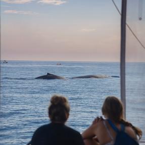Whale Swim, Mooloolaba, Sunshine Coast (