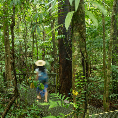 Daintree Discovery Centre (4).jpg