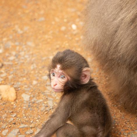 Le Petit Monkey