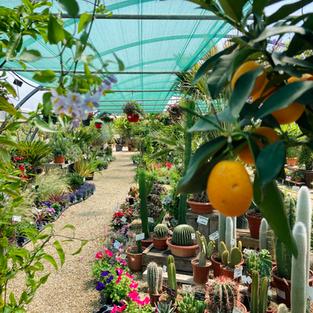 pepiniere les jardins de suzanne.png