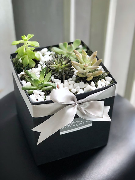 Succulents-in-a-box