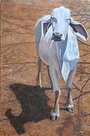 Brahmin Cow acrylic 24x40.jpg