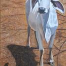 Brahmin Cow acrylic 24x40_