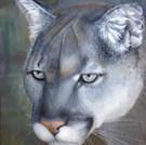 Canadian Cougar