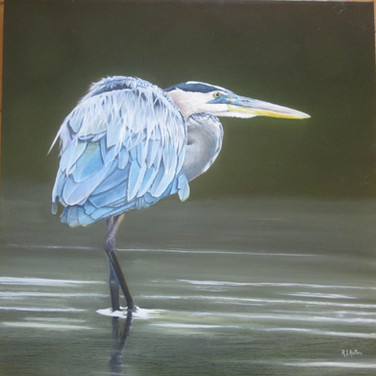 Heron in the Shallows