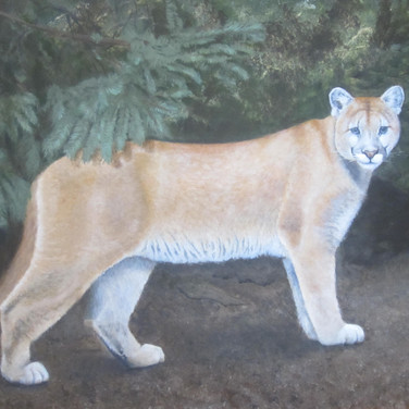 Dave's Cougar